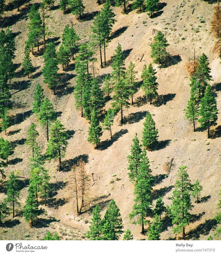 Tree Green Summer Forest Bright Brown Earth Fir tree Canada Tree trunk Slope Steep Roadside August Sunlight Coniferous forest