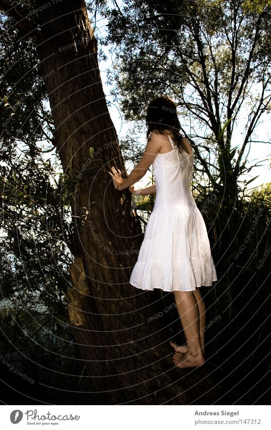 Alice, is that you? Forest Tree Woman Dress White Barefoot Feminine Tree bark Climbing Back Feet Lake Lakeside Undergrowth Youth (Young adults) Hold To hold on