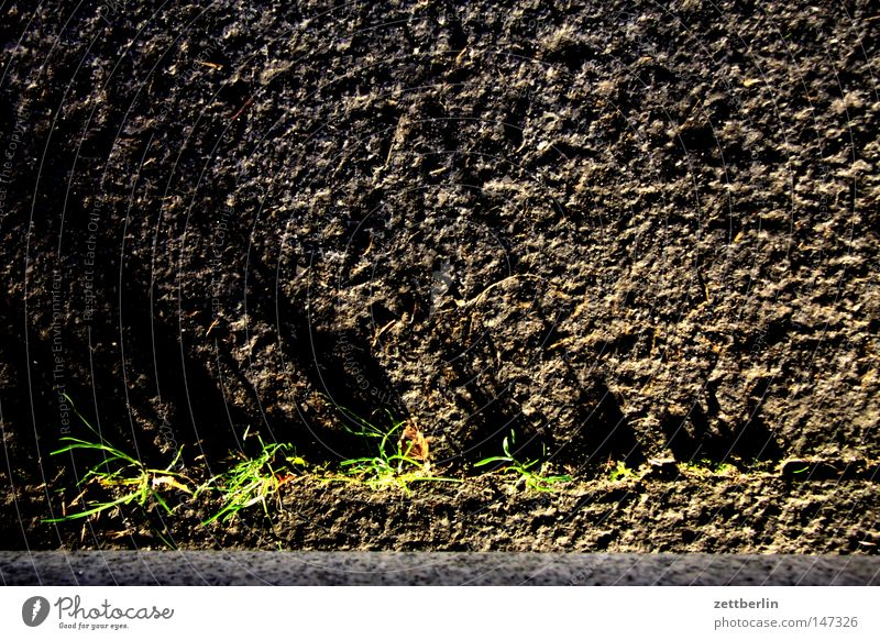 grass Grass Furrow Empty Power Force Plant Places Parking lot Growth Maturing time Shadow Light Stone Pebble Transience Traffic infrastructure Gap rolled gravel