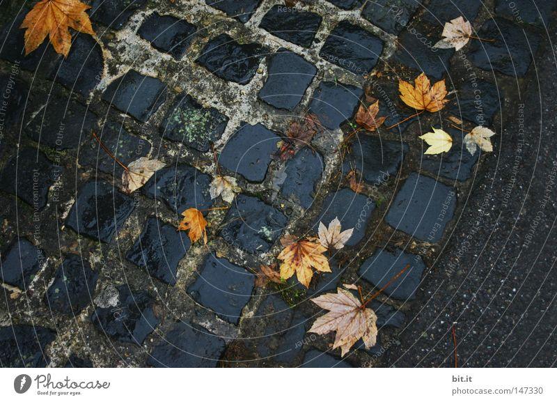 Leaf Yellow Street Autumn Lanes & trails Wet Asphalt Cobblestones Patch