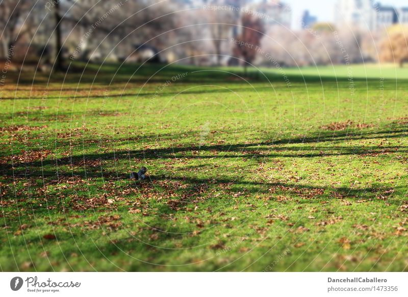 Nature City Leaf Animal Environment Autumn Meadow Grass Small Park Sit Squirrel Rodent Manhattan New York City Central Park