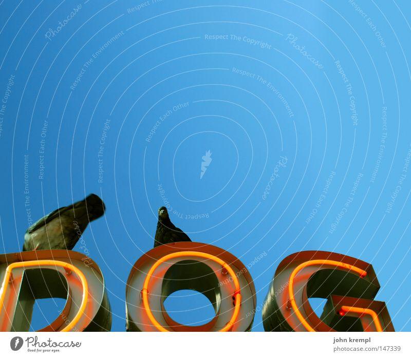 dog Dog Snack bar Pigeon Bird Sky Blue sky Neon sign Advertising Red Brilliant Gastronomy Hot dog sausage stand monkey