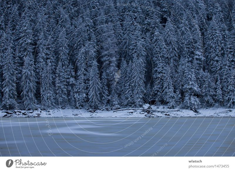 Nature Blue White Landscape Dark Forest Black Cold Snow Snowfall Ice Frost Gale