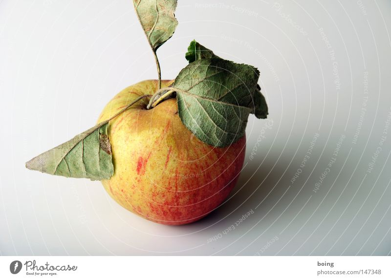 cup Apple Fruit Leaf Apple tree Organic produce Organic farming Biological Fuit growing Healthy unsprayed with optical defects from the orchard meadow