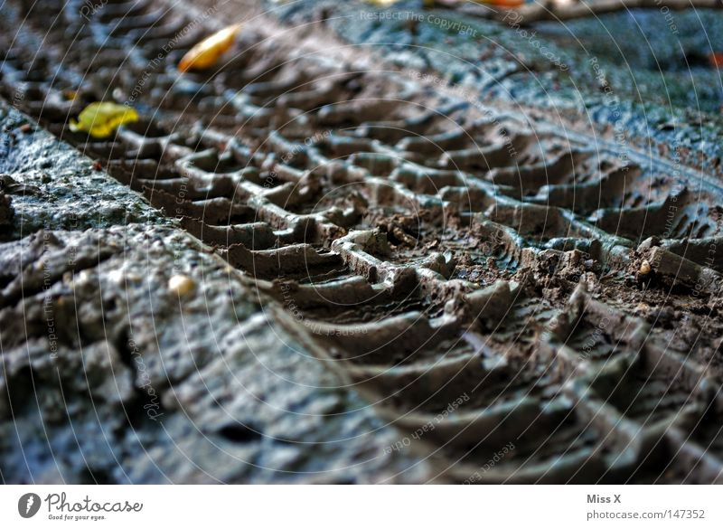 Leaf Street Autumn Lanes & trails Gray Brown Earth Dirty Tracks Footpath Tire tread Tire Mud Skid marks Stony Imprint