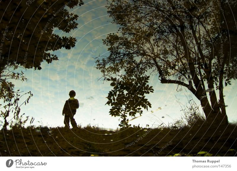 stream of heaven Colour photo Exterior shot Copy Space top Day Child Human being Masculine Boy (child) Infancy 1 3 - 8 years Nature Sky Autumn Tree Grass Bushes