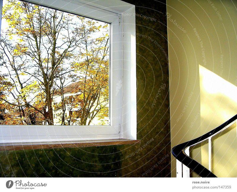 Tree Calm Autumn Window Warmth Stairs Physics Idyll Light