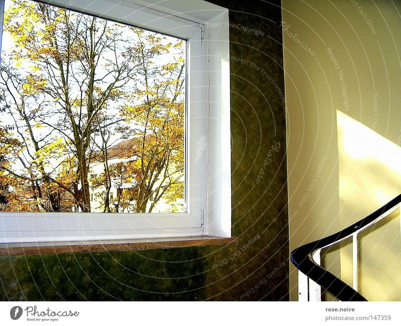 Tree Calm Autumn Window Warmth Stairs Physics Idyll Light