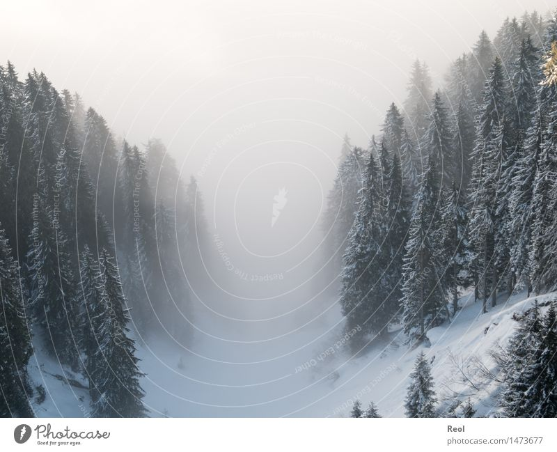 fog valley Nature Landscape Elements Winter Beautiful weather Fog Snow Plant Tree Fir tree Forest Mountain Coniferous forest Valley Dark Black White Calm