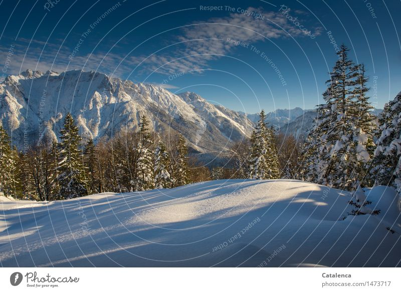 winter joy Winter Snow Winter vacation Mountain Hiking Skis Environment Nature Landscape Plant Clouds Horizon Sunlight Beautiful weather Tree spruces Forest
