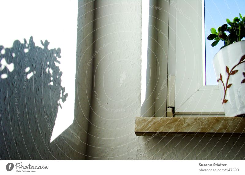 Plant Wall (building) Window Air Earth Pot Flowerpot Window board Houseplant Ingrain wallpaper Baobab tree