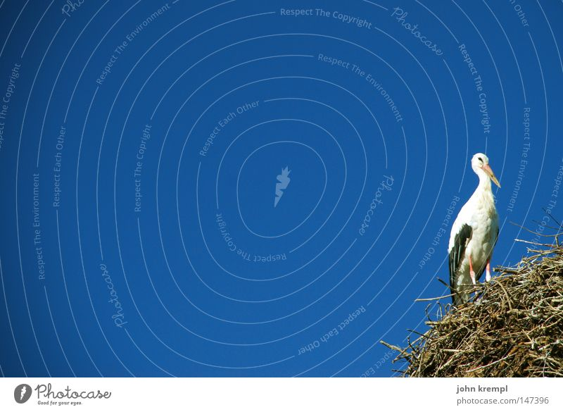 Sky White Blue Bird Nest Stork Delivery person Nest-building