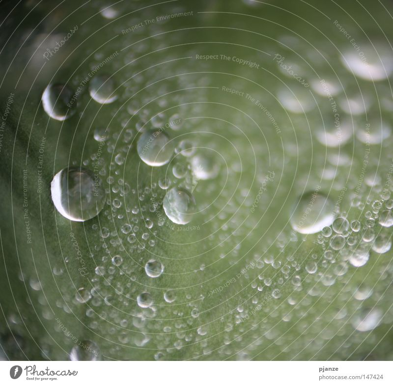 Plant Green Leaf Meadow Grass Rain Drops of water Wet Rope Round Delicate Damp Rachis Karlsruhe 2008