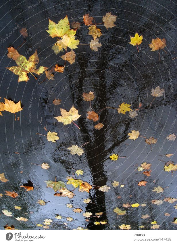 The leaves have fallen Tree Leaf Wet Cold Damp Autumn Asphalt Reflection Transience Rain Street Water Allegory ...