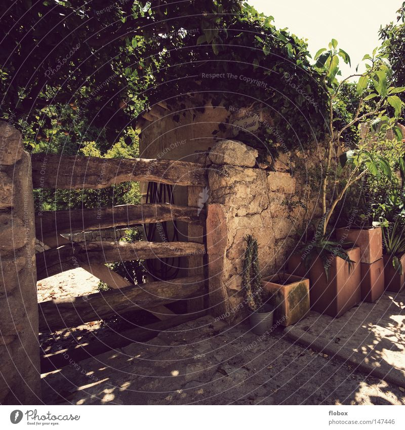 paradise Mount Eden Fold Greenhouse Growth Flower Flowerpot Orange Tree Cactus Wooden gate Gardenhouse Wall (barrier) Mysterious Majorca Spain Small Town