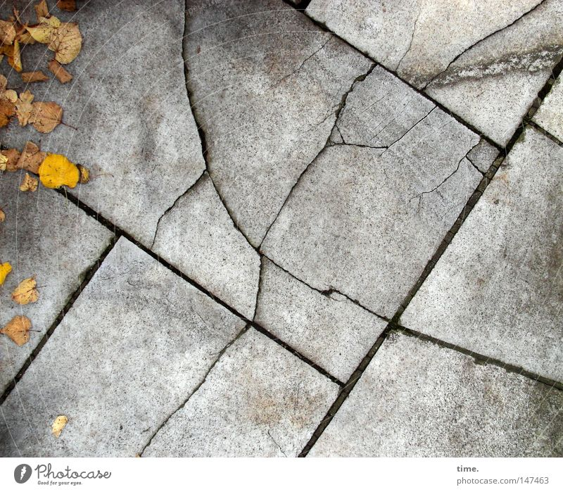 Leaf Autumn Gray Together Power Concrete Corner Authentic Floor covering Longing Things Sidewalk Broken Traffic infrastructure Curve Lanes & trails