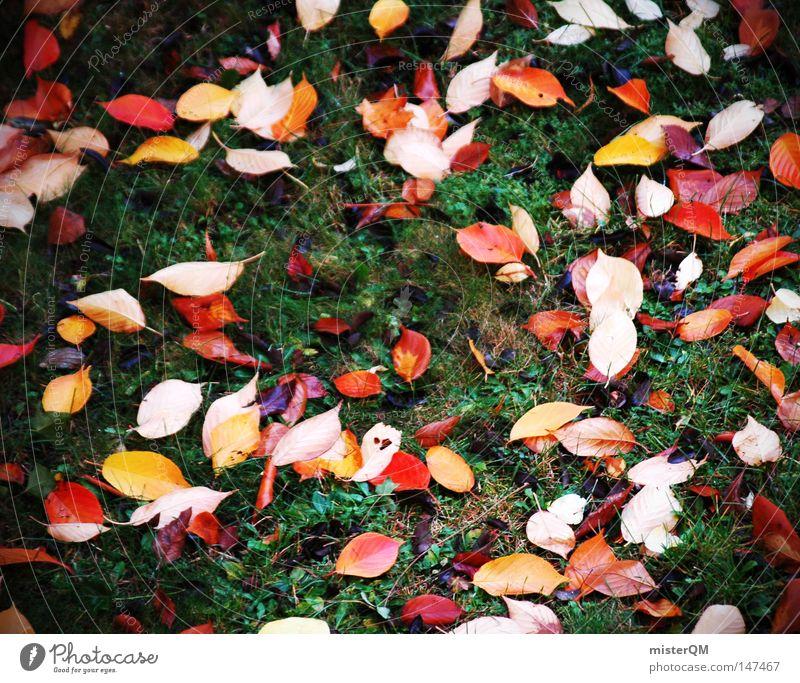 On the ground Destroyed - Autumn Day Leaf Nature Pure Beautiful Esthetic Multicoloured Blue Beautiful weather Wind Leaf canopy Green Leaf green End Seasons Red