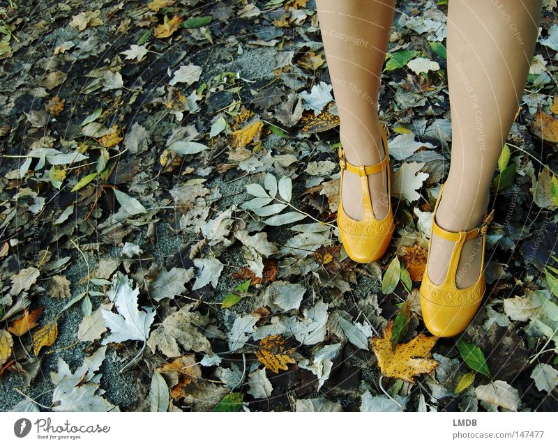 Suitable shoes for autumn: € 19,90 Footwear Buckle Autumn Leaf Yellow Green Asphalt Roadside yellow shoes Landing To go for a walk Feet Legs Street