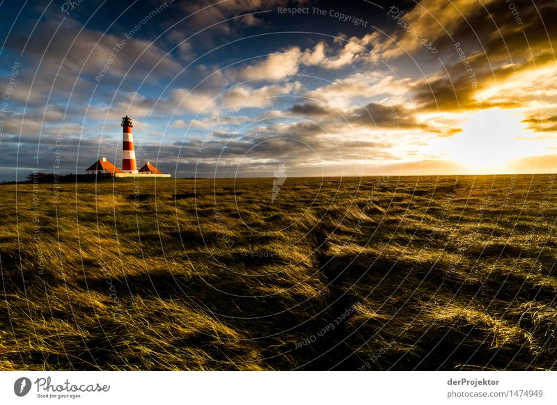 salt marshes and Westerhever lighthouse variant Vacation & Travel Tourism Trip Far-off places Freedom Hiking Environment Nature Landscape Plant Animal Winter