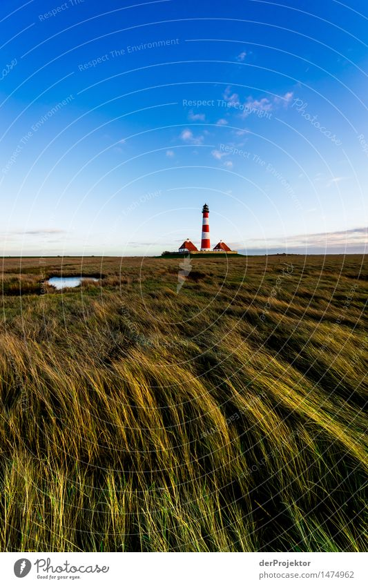 Dune grass and Westerhever lighthouse Vacation & Travel Tourism Trip Far-off places Freedom Hiking Environment Nature Landscape Plant Animal Winter