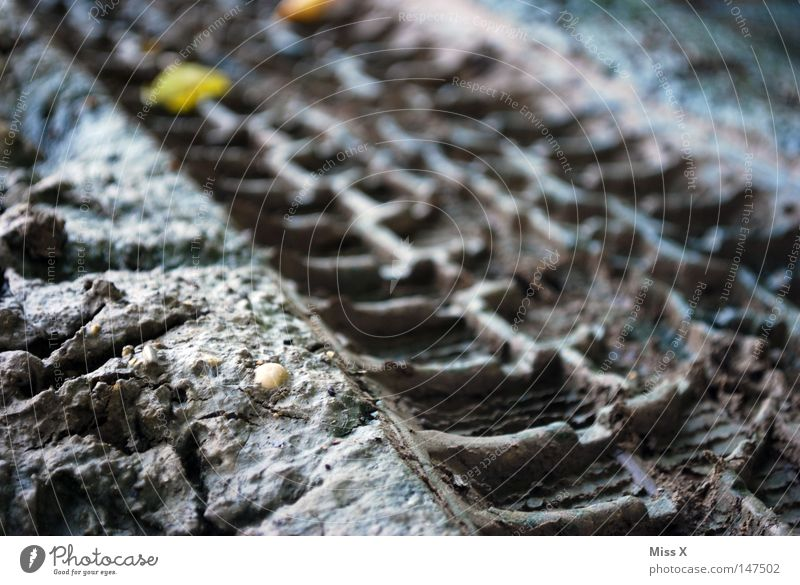 Track 2 Colour photo Exterior shot Twilight Silhouette Profile Earth Autumn Leaf Street Lanes & trails Dirty Brown Gray Sludgy Stony Earthy Mud Skid marks