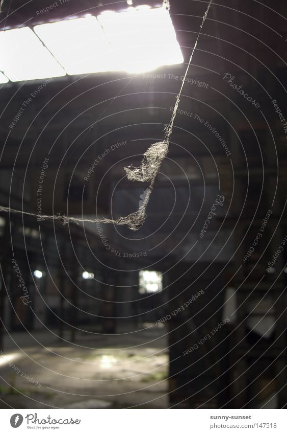 forsake sb./sth. Spider's web Cobwebby Spider legs Warehouse Loneliness Sunlight Back-light Gray Dark Calm Hall Derelict