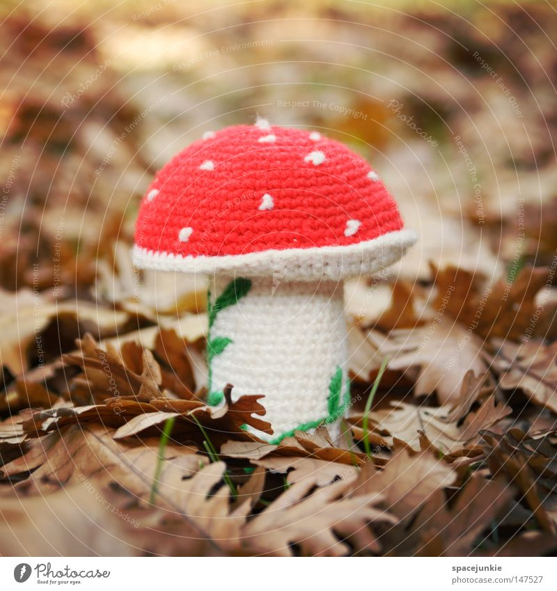 lucky devil Mushroom Amanita mushroom Poisonous plant Poisoned Woodground Leaf Autumn Autumn leaves Illusion Intoxicant Kitsch Joy mushroom poisoning Inedible