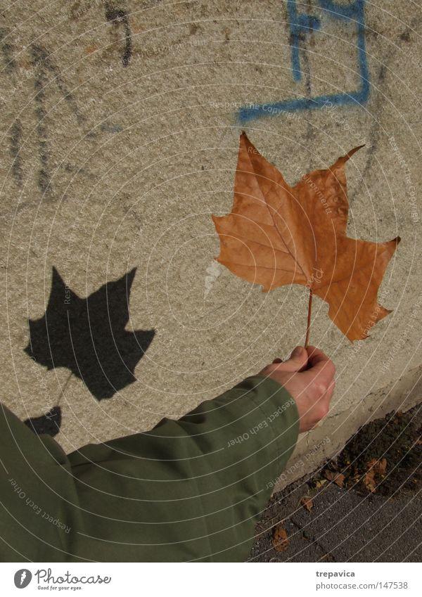 blatt Autumn wand herbst schatten spielen Plant Leaf Grade (school level) Arm herbstlich schauspieler schattentheater Hand strasse jahreszeit oktober spazieren