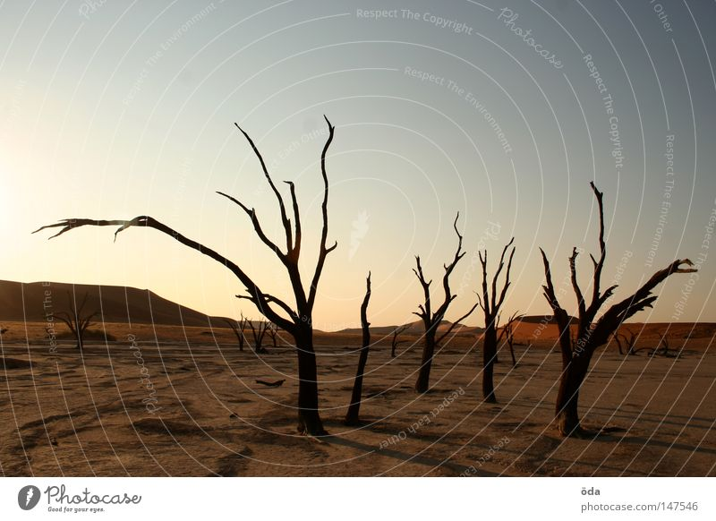 extinct Desert Tree Death Shriveled Dry Shadow Branchage Twigs and branches Namibia Dead Vlei Sossusvlei Namib desert Loneliness Dune Land Feature