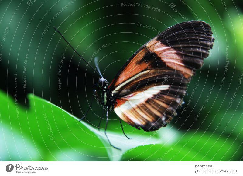 just butterfly Nature Plant Animal Spring Summer Tree Bushes Leaf Garden Park Meadow Wild animal Butterfly Wing 1 Observe Relaxation Flying To feed Exceptional
