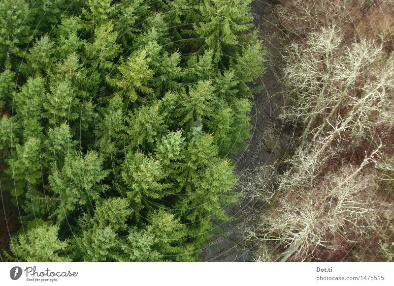Christmas tree line Nature Landscape Plant Water Tree Forest Brook River Tall Green Fear of heights Coniferous trees Fir tree Border Two-piece Bird's-eye view