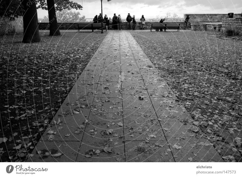 The way to the view Autumn Lanes & trails Tree Leaf Black & white photo Human being Vantage point Tallinn Estonia Sky Far-off places Stone Clouds Damp