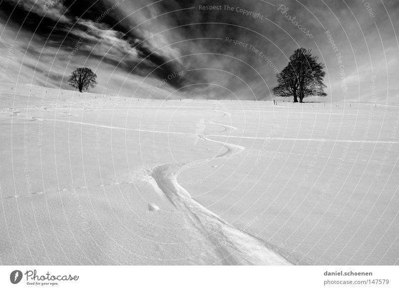 Snowboard christmas card Winter Black Forest White Tracks Deep snow Winter sports Leisure and hobbies Vacation & Travel Background picture Tree Snowscape Nature