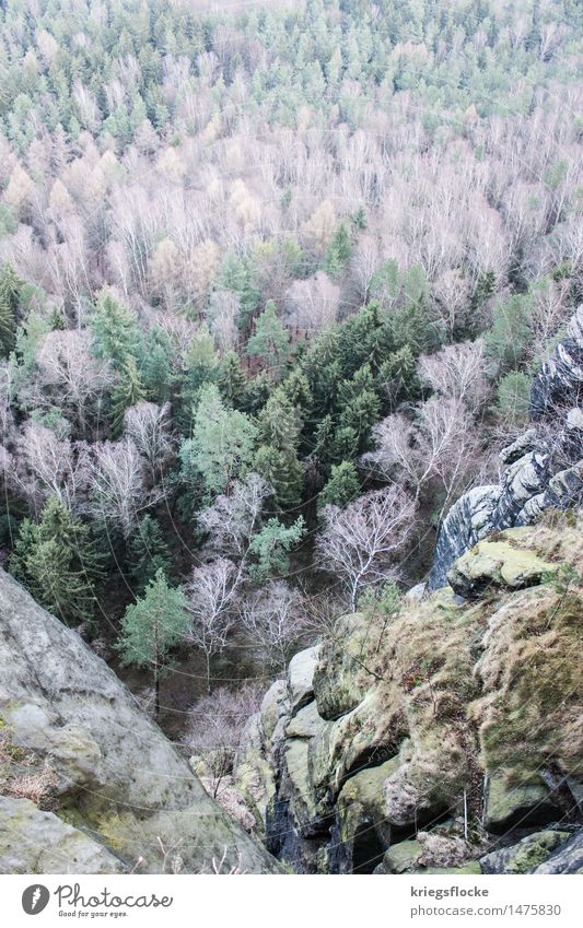 tree colours Nature Landscape Plant Tree Forest Rock Mountain Moody Colour Bird's-eye view Far-off places Vantage point Saxon Switzerland Liliesstein Hiking