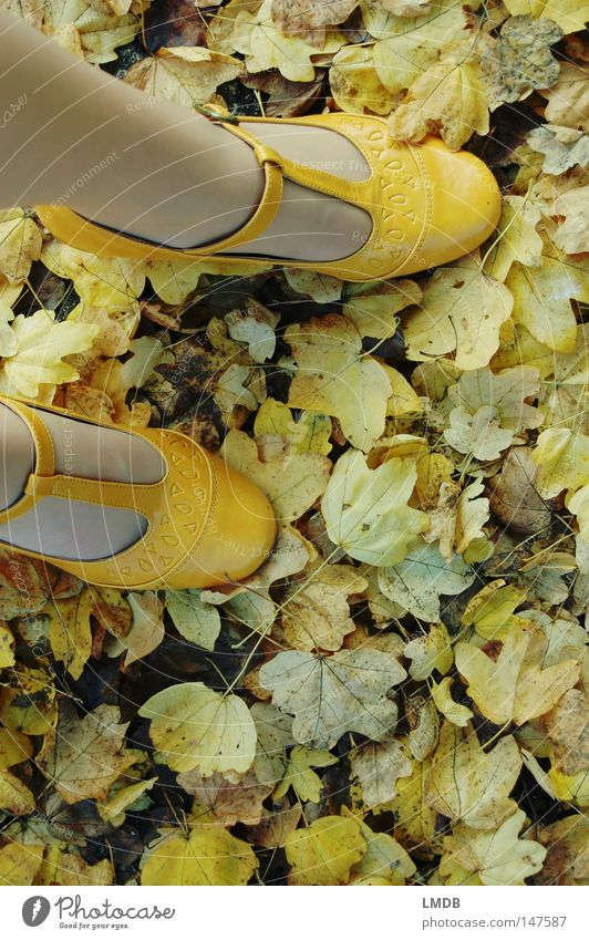Green Leaf Yellow Street Autumn Feet Lanes & trails Footwear Legs To go for a walk Asphalt Landing Roadside Buckle
