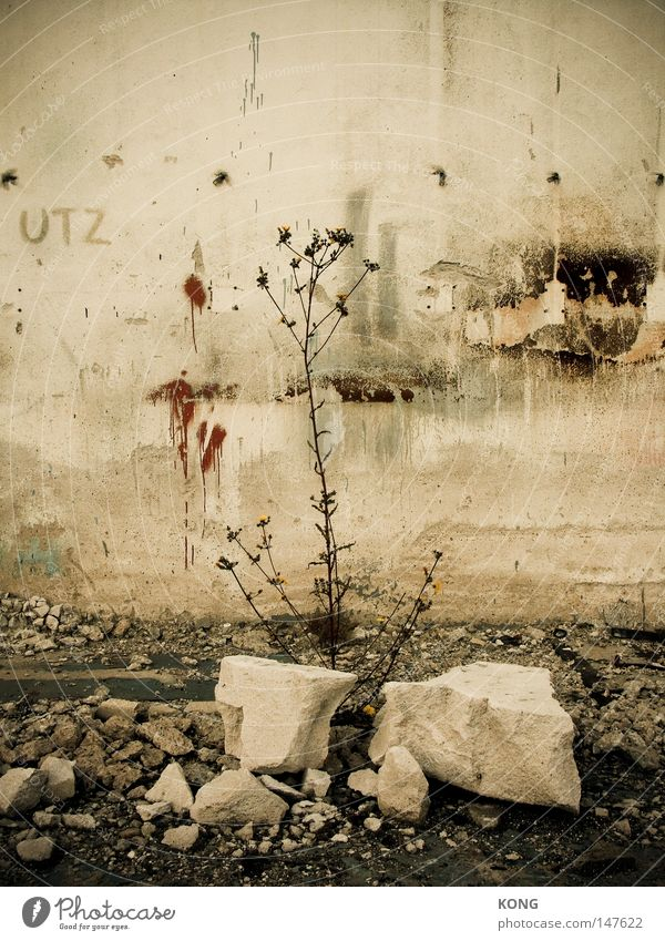Plant Flower Loneliness Autumn Death Time Stone Growth Transience Broken Derelict Decline End Past Shriveled Limp