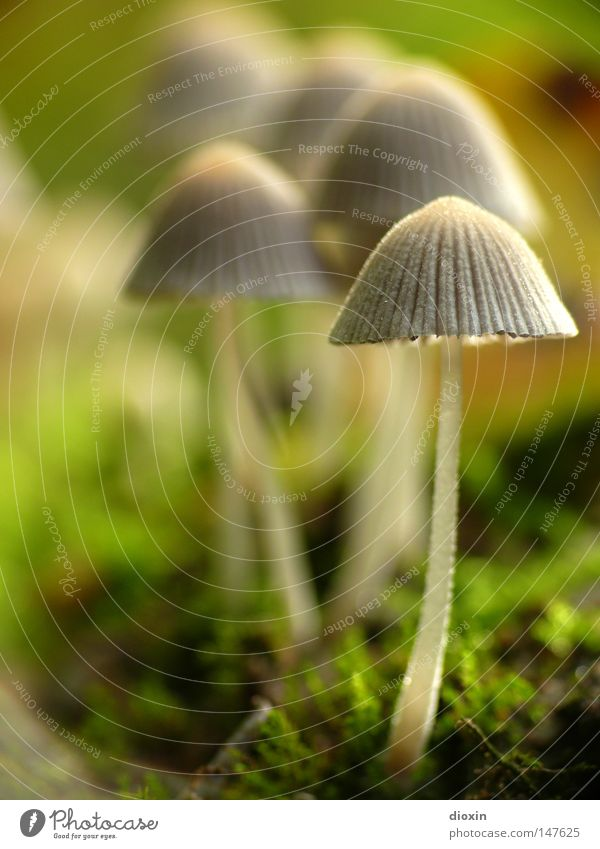 Nature Environment Autumn Small Park Multiple Living thing Stalk Macro (Extreme close-up) Umbrellas & Shades Mushroom Moss Accumulation Woodground Blur Lamella