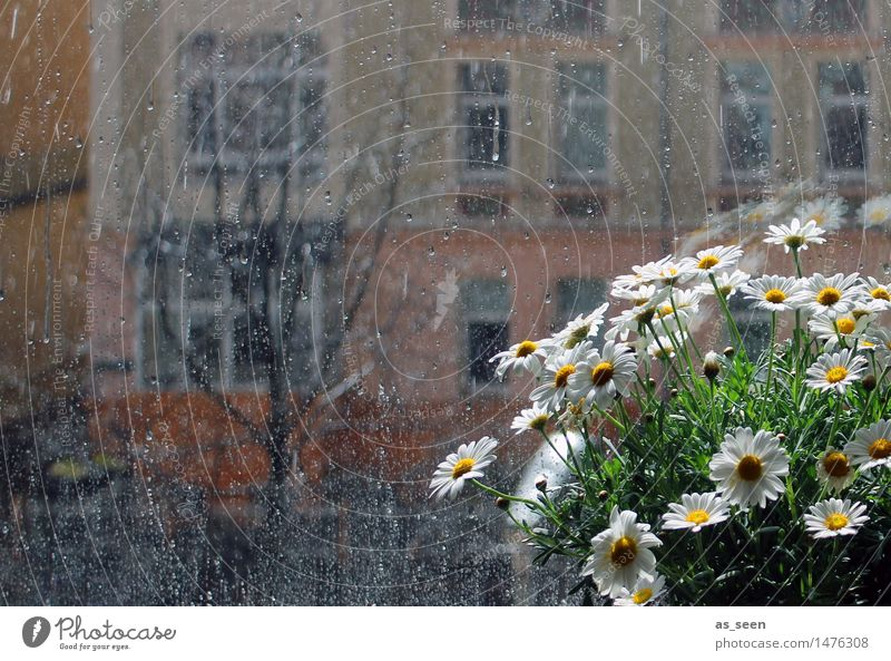 At the window Calm Flat (apartment) Room Plant Sun Flower Marguerite Chamomile Blossom Pot plant Flowerpot Window Blossoming Esthetic Bright Yellow Green Orange