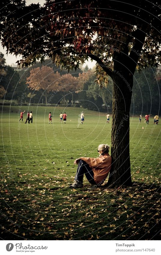 Tree Leaf Relaxation Meadow Autumn Garden Park Walking Soccer Running sports Break Observe Seasons Tree trunk Breathe Runner