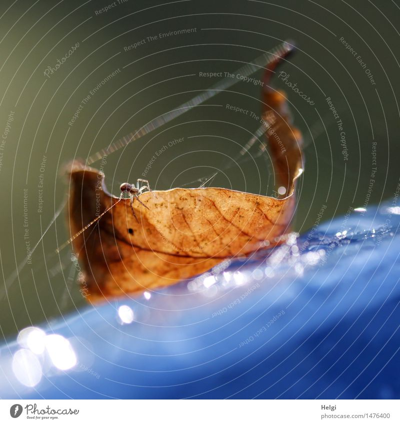 By a silken thread... Environment Nature Plant Animal Drops of water Autumn Leaf Park Spider 1 Plastic Old Glittering Crawl Lie To dry up Authentic Uniqueness