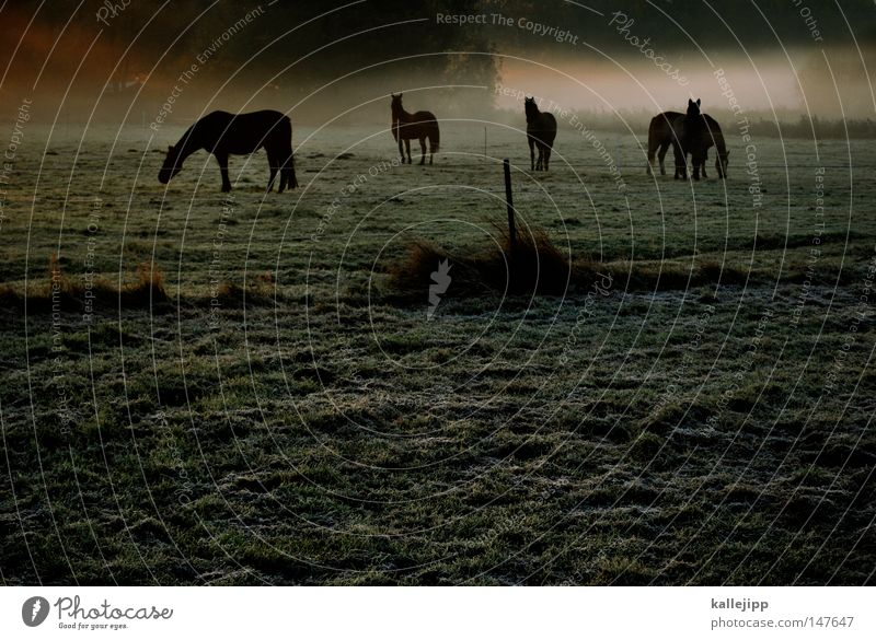 It's gonna be a beautiful day. Horse Beautiful Esthetic Graceful Fog Morning Sunrise Meadow Grass Drops of water Rope Dew Animal Environment Nature Harmonious