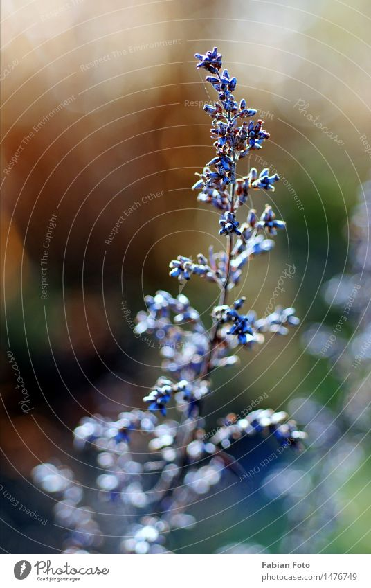beginning of winter Nature Plant Winter Ice Frost Bushes Park Meadow Discover Growth Blue Violet Bud Colour photo Exterior shot Close-up Detail