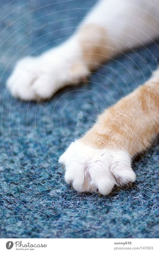 Cat Mammal Paw Carpet Claw Attack Cat's paw