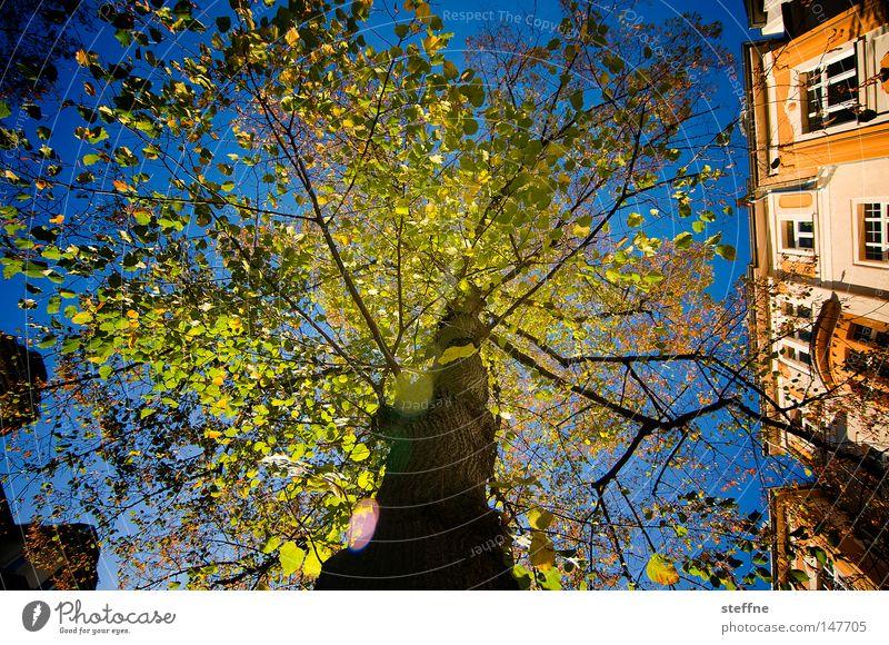 Fabulous Tree Fairy tale Enchanted forest Light Moody Green Lighting Art nouveau Autumn
