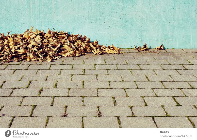 Nature Tree Colour Leaf Yellow Warmth Autumn Wall (barrier) Background picture Earth Gold To go for a walk Floor covering Beautiful weather To fall Concentrate