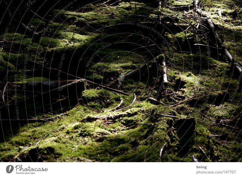 Foliage in the fairytale forest in Spessart Forest Coniferous forest Clearing Moss Floor covering Ground Woodground Tree stump Ferwood Soft Fragrance Sunrise