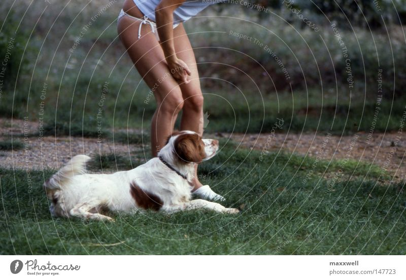 Joy Meadow Dog Woman Concentrate Watchfulness Mammal Young woman Hound