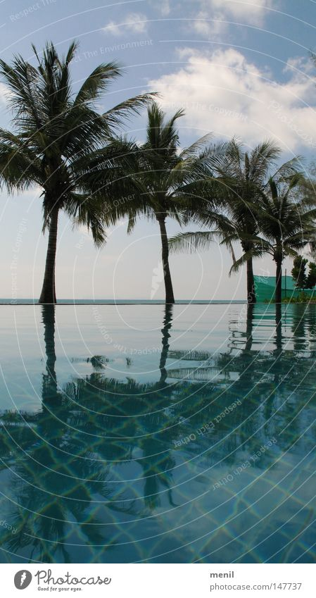 Palm trees by the pool Ocean Swimming pool Vacation & Travel Sky Nature Plant Coconut Water Chlorine Clouds Horizon Asia Thailand Koh Phangan Summer chill