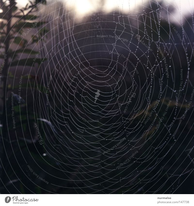 Nature Green Autumn Death Moody Glittering Fear Fly Authentic Drops of water Circle Sign Drop Agriculture Net Muddled
