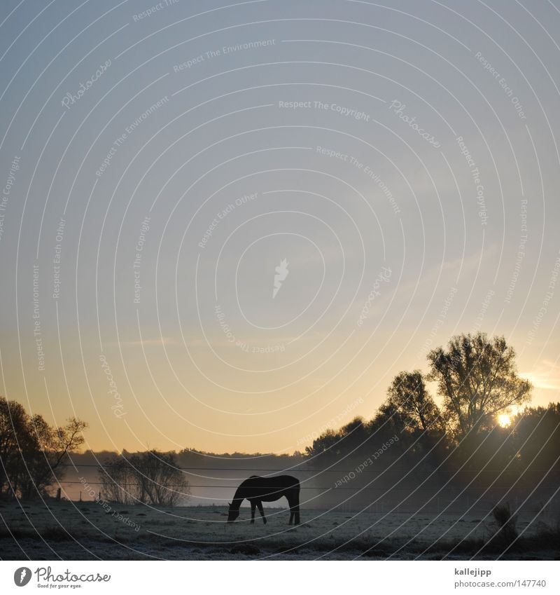 wild, wild brandenburg Horse Beautiful Esthetic Graceful Fog Morning Sunrise Meadow Grass Drops of water Rope Animal Environment Nature Harmonious Nostrils